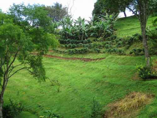 terraced slopes